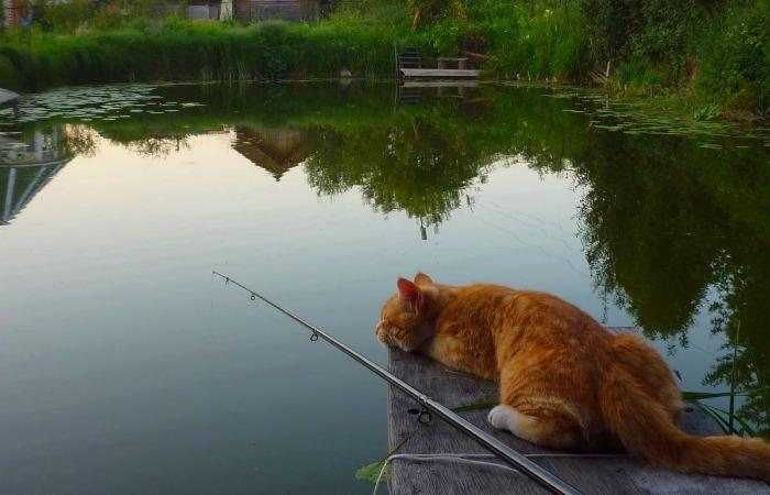 Что делать, когда рыба не хочет клевать?