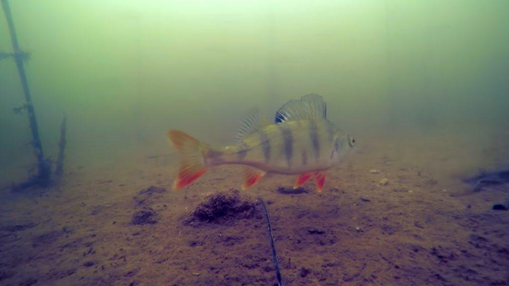 Что видят рыбы...