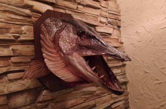 Сувениры из рыбацких трофеев - как изготовить